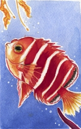 FishWeb